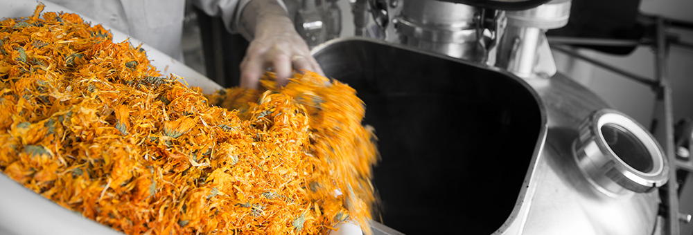 Extraction du Calendula [Acanthis]